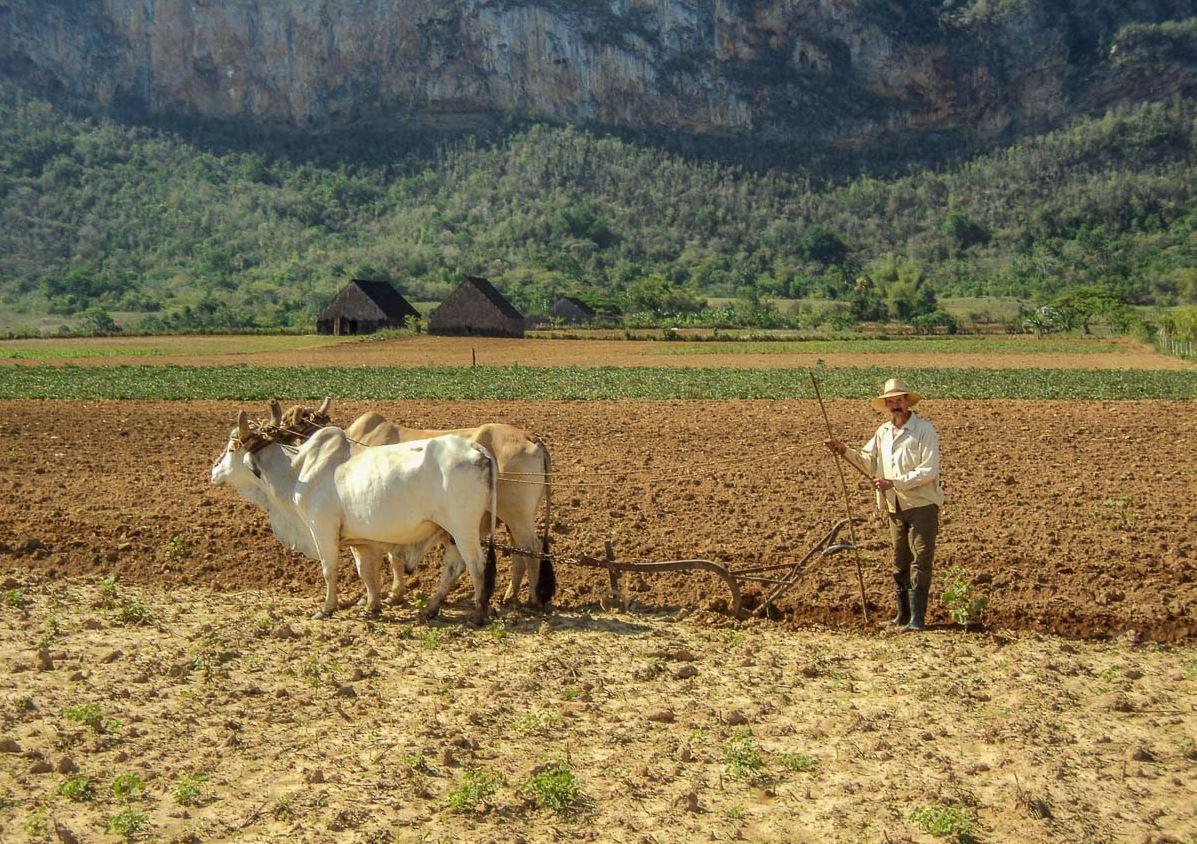 Cuba : Tourisme agricole et culturel