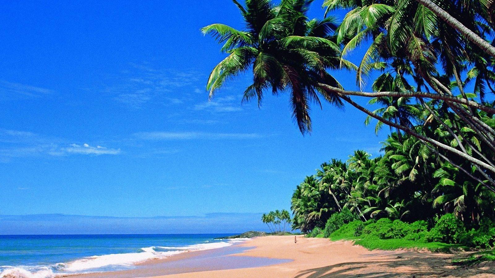 La plage du Kerala en Inde