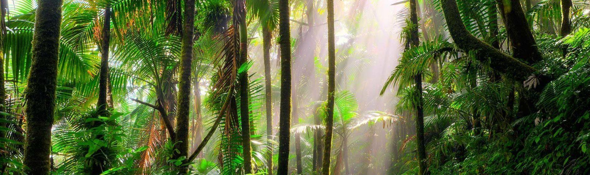 Trekking sur les routes du Costa Rica