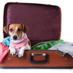 vacances animaux